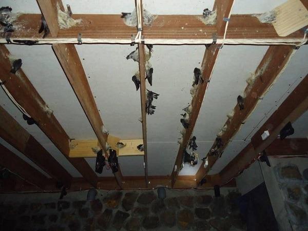 sửa chữa nhà yến