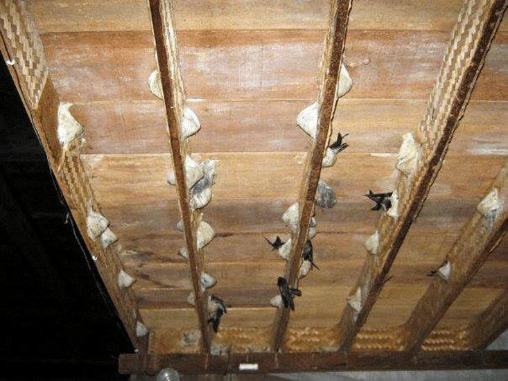 Đánh giá chi tiết về gỗ nhà yến bạch đàn Indonesia